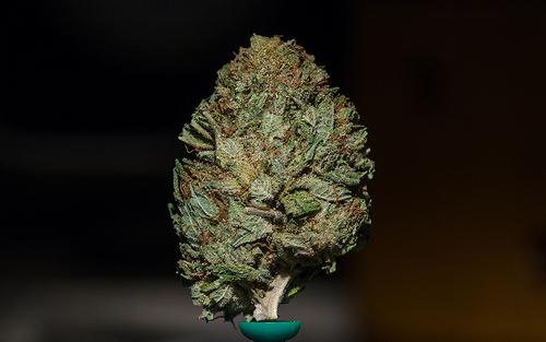 Worst Possession of Marijuana Defenses